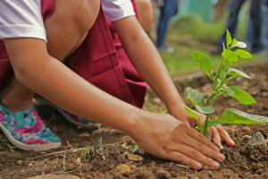 Eco-Schools and Environmental Education for Sustainable Development