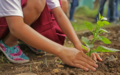 Going Green: Eco-Schools & Environmental Education for Sustainable Development (1 week)